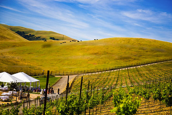 Vineyard outdoor wedding videography at NELLA TERRA CELLARS, SUNOL